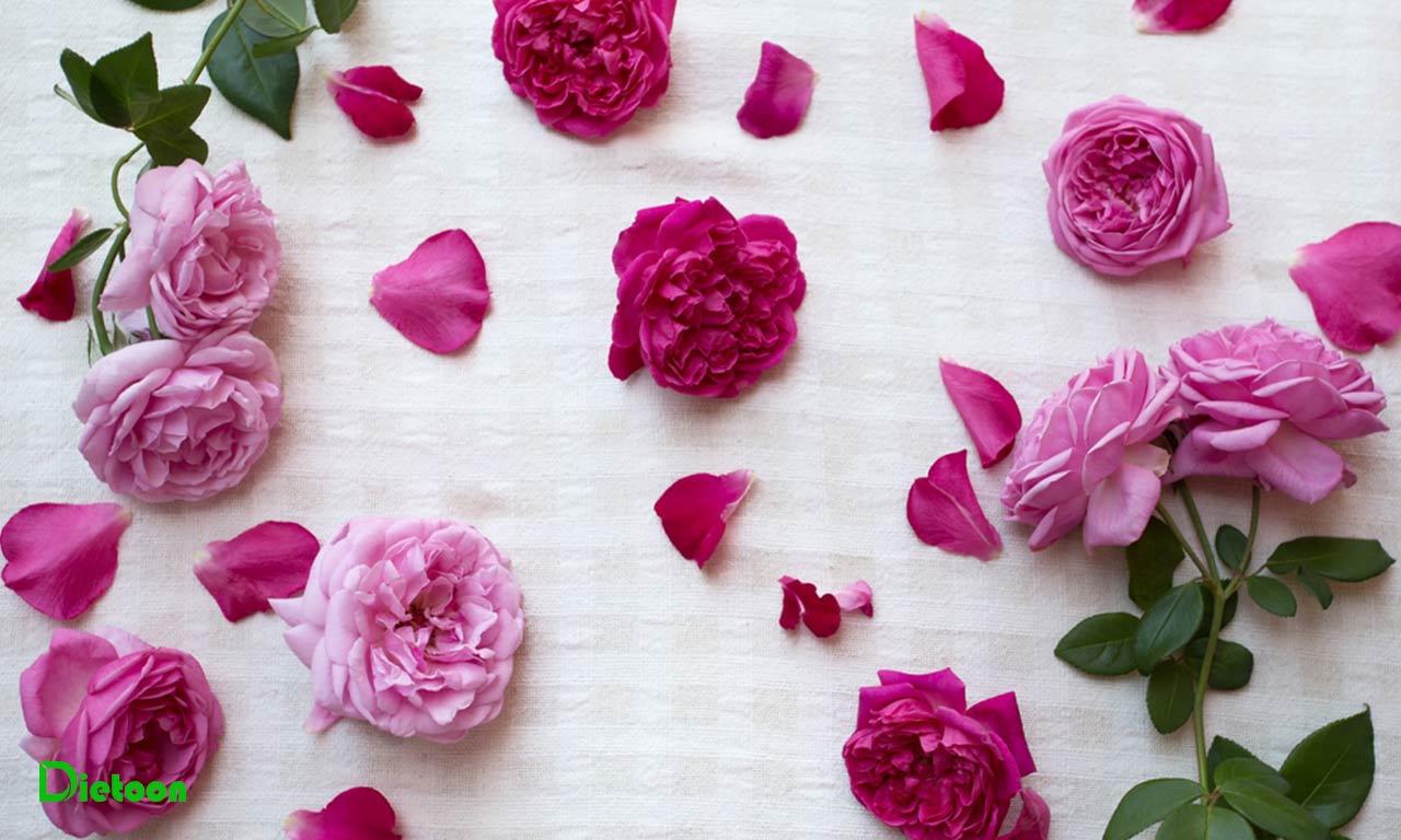 گل سرخ سرشار از آنتی اکسیدان است